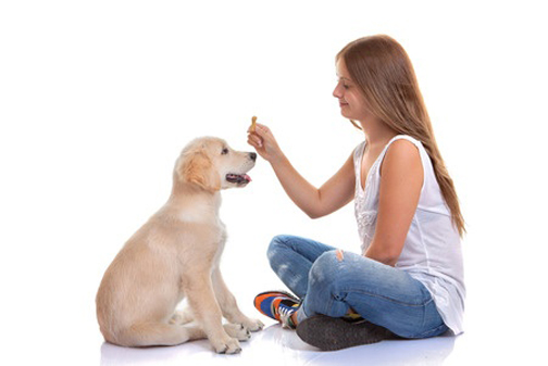 26398277 - owner training puppy dog with treat
