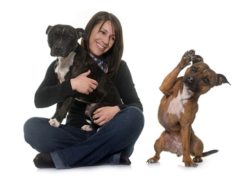 53333784 - woman and staffordshire bull terrier in front of white background