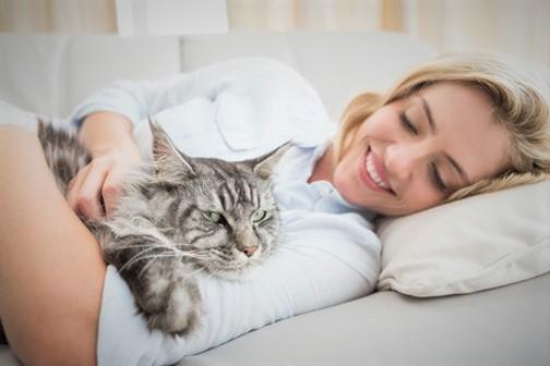 Elgin cat comforts
