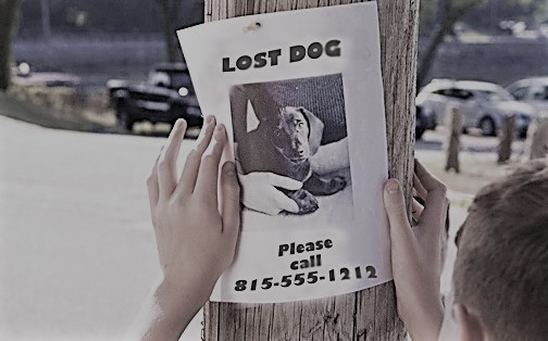 Lost Naperville dog poster