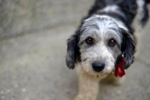 32324828 - sad look of a cute stray dog