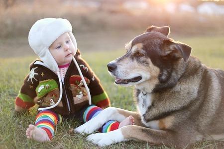 Addison train dog children