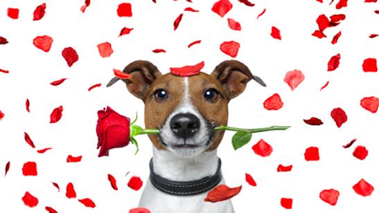 Dog training Valentines Day