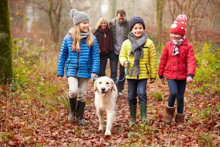 33473450 - family walking dog through winter woodland