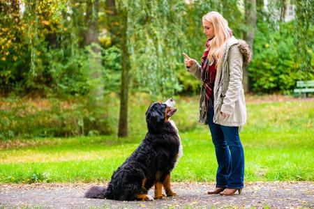 Port Barrington dog training