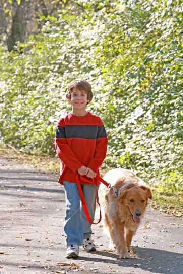 child training dog